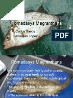 Pomadasys Magranthans