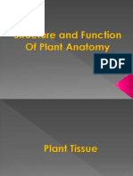 Structure n Function of Plant