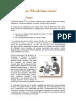 Analisis Organico CACAO