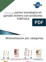 Mineralizacion TORTUGA - LECHE-Presentacion