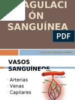 2342820-COAGULACION-SANGUINEA