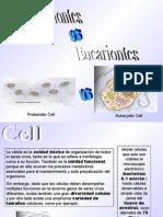 Procarionte_Eucarionte1_5