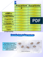 Procarionte_Eucarionte6_16