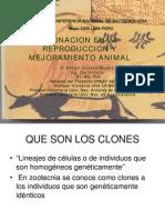 13 W Vivanco-Clonacion Animal