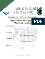 Fagocitosis in Vitro (prueba de opsonocitofagocitosis)