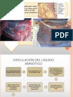 Embriologia(Liquido Amniotico y Embarazos Multiples)