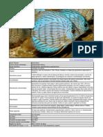 Acará Disco - Symphysodon aequifasciatus aequifasciatus