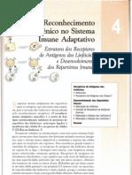 04 - Reconhecimeto Antigênico no Sistema  Imune Adaptativo