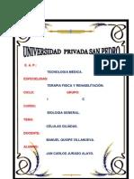 CELULAS CILIADAS (BIOLOGIA)