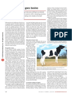 Biotech Breeding Goes Bovine
