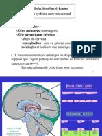 Infections Bactériennes Du Système Nerveux Central