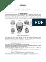 Craniul