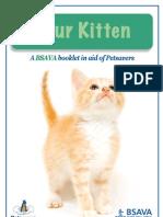Kitten Guide Web