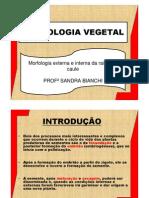 2Aula - Morfologia Vegetal