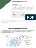 Bioquimica-Água