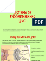 12-SISTEMA DE ENDOMEMBRANAS