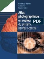 Atlas photographique en couleur du système nerveux central - coursdemedecine.blogspot