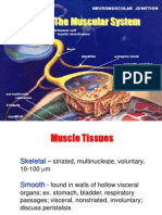 012 Muscular System[1]
