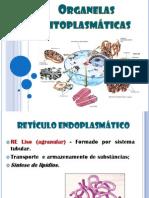 AULA Organelas Citoplasmáticas