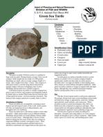 01 Green Turtle