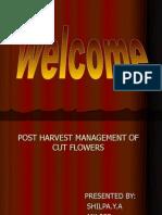 Shilpa,Cut Flowers