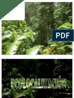 Ecolocalización ( Echolocation)
