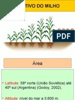 cultivodomilho-110215201937-phpapp01