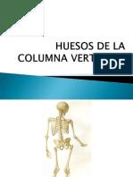5 Huesos de La Columna Vertebral