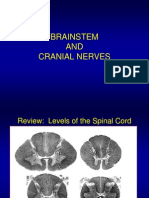 brainstem.cranialnerves