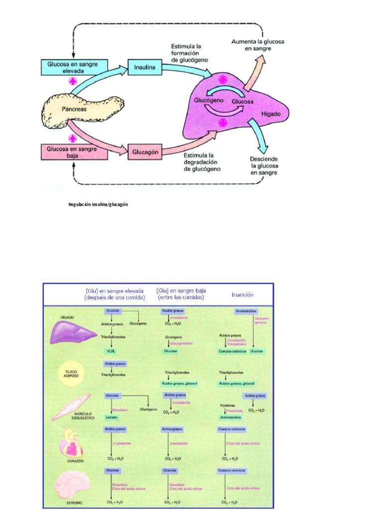 Opciones principales de Ibuprofeno metabolismo