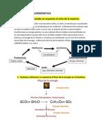 SEMINARIO N°1 bioenergetica