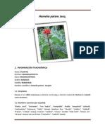 Ficha técnica del tochomite (Hamelia patens)