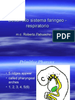 Desarrollo Sistema Faringeo - Respiratorio