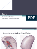 Anatomia Radio Logic A de Bazo