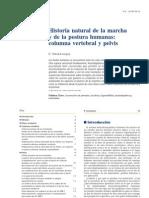 Historia Natural de La Marcha Y de La Postura Humana, Columna Vertebral Y Pelvis