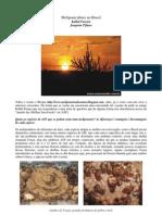 Meliponicultura No Brasil