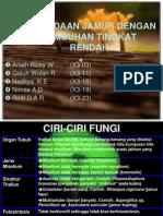 Jamur vs Tumbuhan Tingkat Rendah