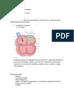 58. Cardiopatia Cianotica