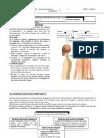 Cta Sistema Nervioso Periferico Central Sexto 9