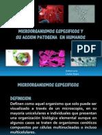 Microorganismos Especificos en Humanos