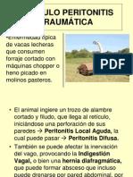 Reticulo Peritonitis Traumatic A