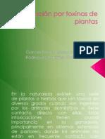 Irritación por toxinas de plantas