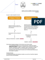 AMPLIACIÓN DE FAGOCITOSIS (sobre pinocitosis)
