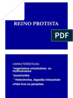 (2) Reino Protista