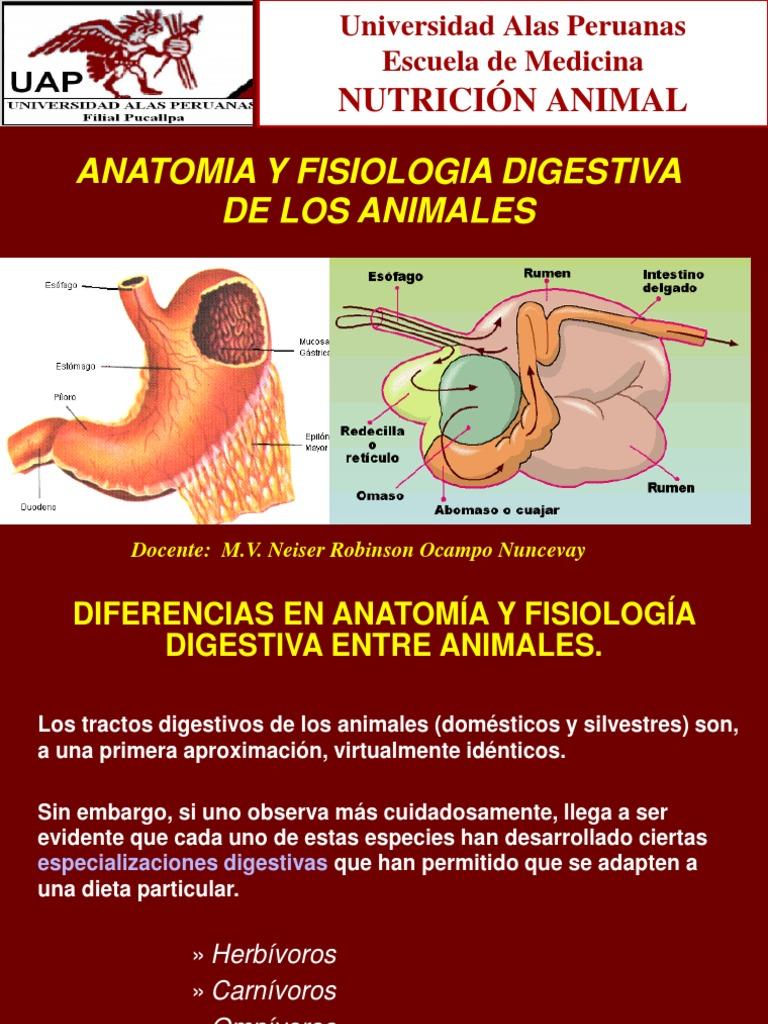 Nutricion animal - Anatomia y Fisiologia Digestiva Veterinaria