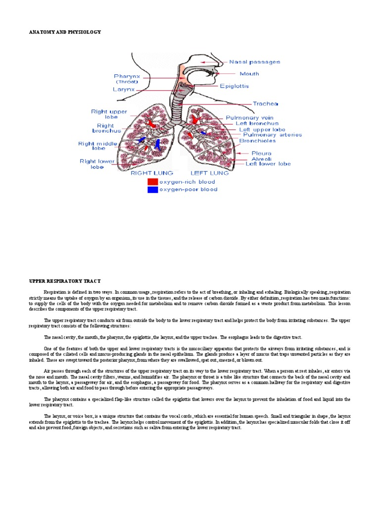 PTB | Respiratory Tract | Respiratory System