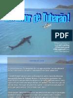 Amor de Tubarão