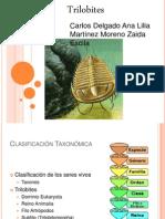 Trilobites - Presentación