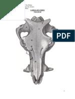 Esqueleto Axil Huesos Con Tex 3
