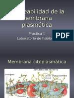 permeabilidadmp